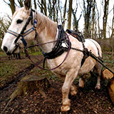 Photo of a shire horse pulling tree trunks in Bradley Stoke